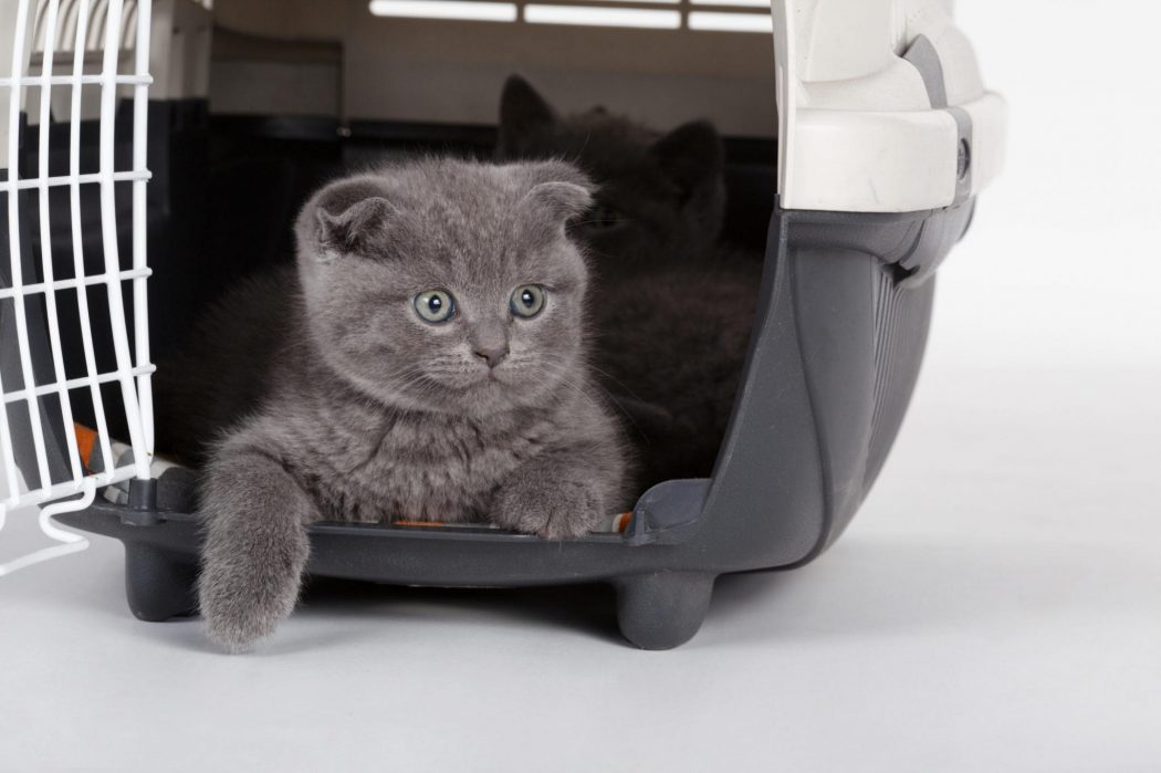 caisse de transport chat